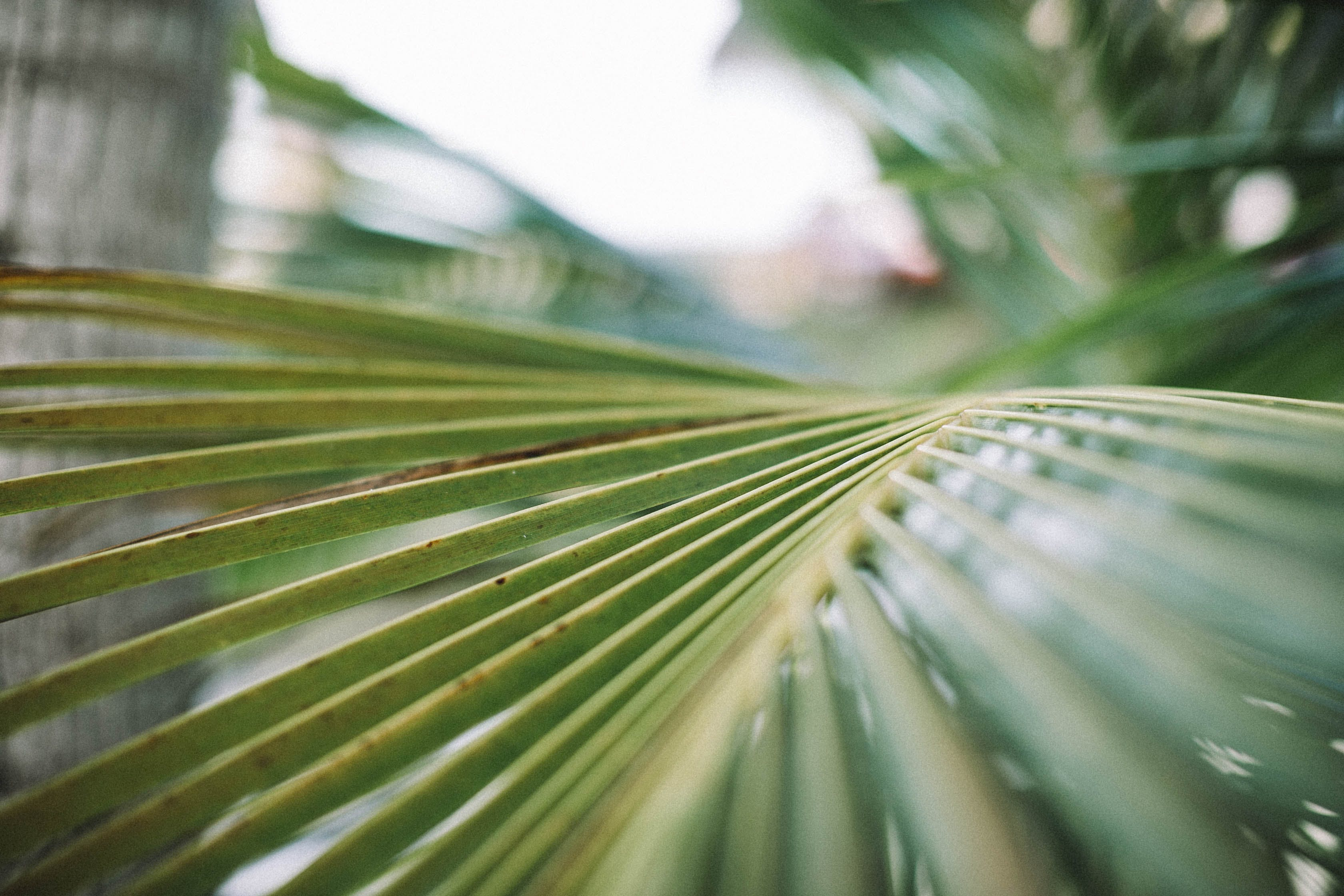 Darmowe zdjęcie z galerii z głębia pola, liść, liść palmowy, liść palmy
