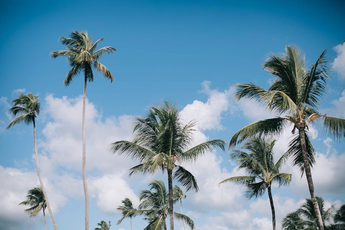 деревья, заводы, кокосовые пальмы