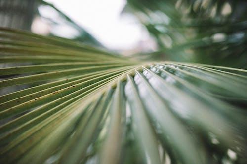 Immagine gratuita di focus selettivo, foglie di palma, primo piano, verde