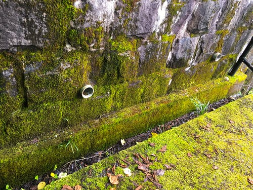 Free stock photo of brick wall, green moss, irrigation, japan