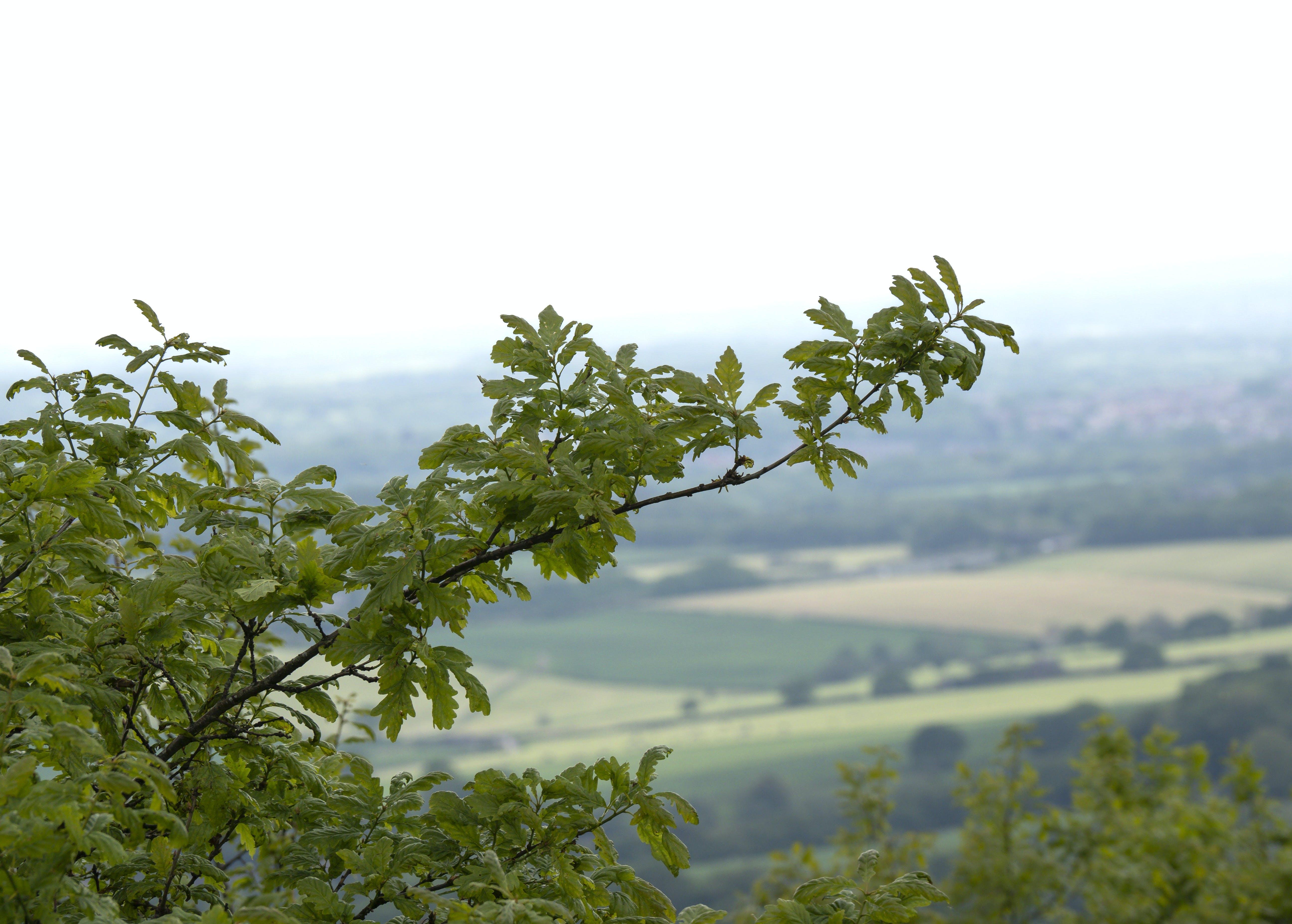 Kostenloses Stock Foto zu west pennine moors, winter hill