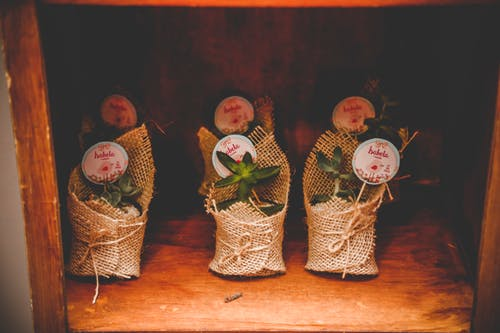 Foto profissional grátis de aumento, botânico, decoração, dentro de casa