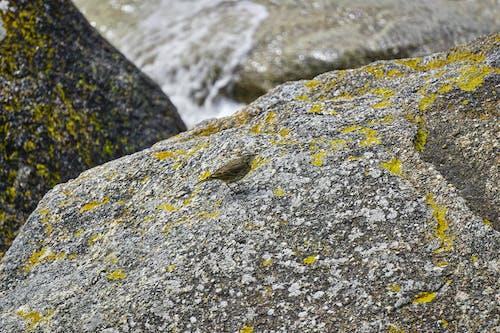 Free stock photo of animal, faune, isole
