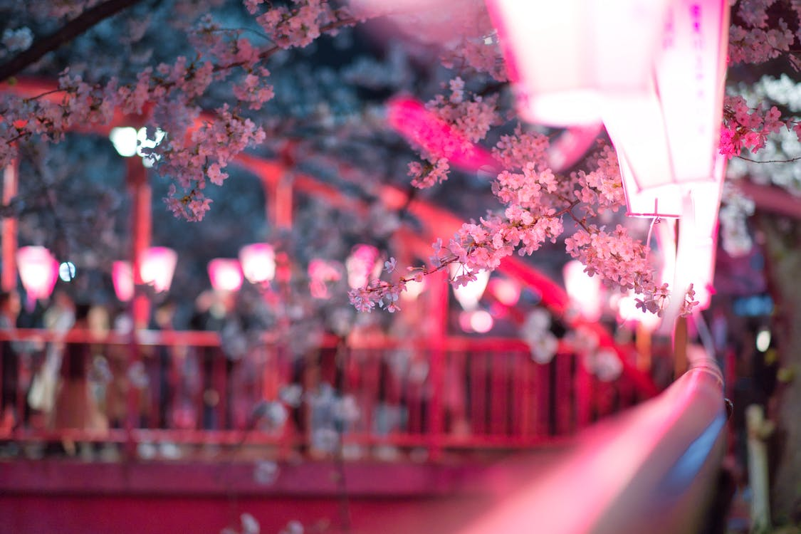 Albero In Fiore Rosa