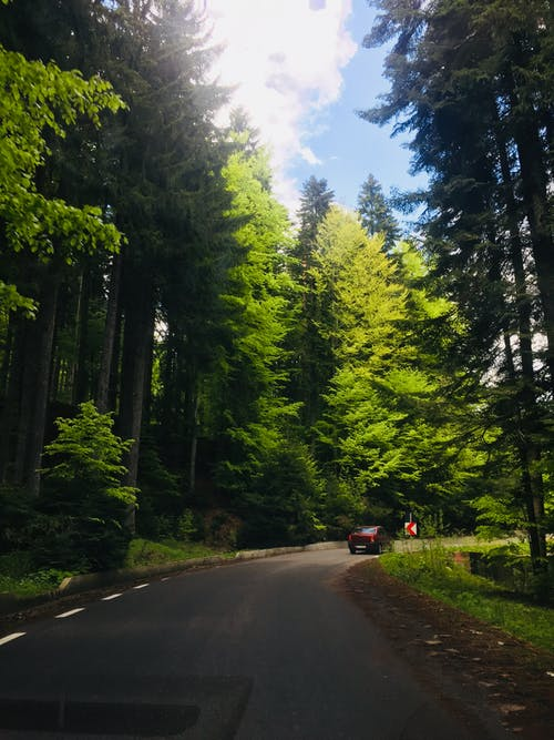 Foto profissional grátis de árvores, asfalto, conduzir, estrada