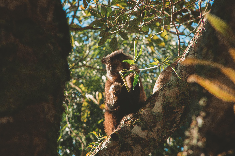 Kostenloses Stock Foto zu baum, primas, regenwald, tier