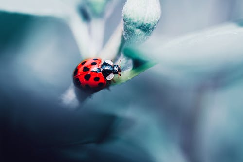 Δωρεάν στοκ φωτογραφιών με beetle, macro, γκρο πλαν, έντομο
