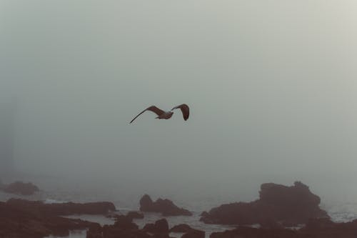 Free stock photo of foggy, rocks, seafoam, seagull