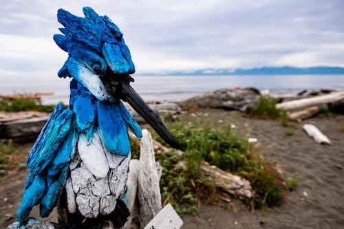 Kostnadsfri bild av blå, dag, fågel, kungsfiskare