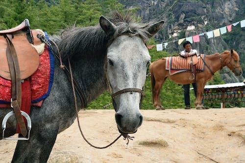 Bután, viaje, costes