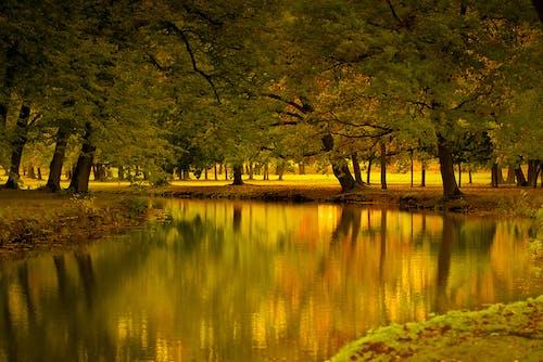 Darmowe zdjęcie z galerii z czerwony, drzewa, jesień, jezioro