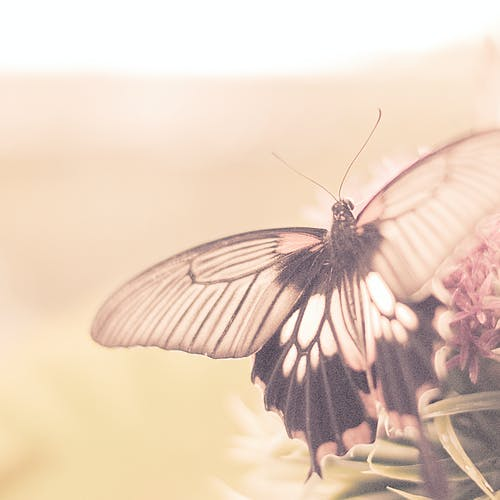Darmowe zdjęcie z galerii z kwiat, makro, motyl, siedzenie
