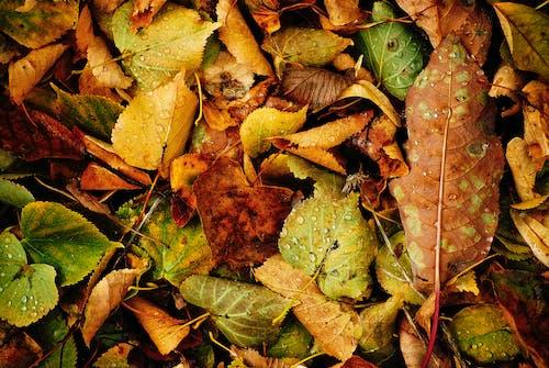 Fotos de stock gratuitas de amarillo, caer, hojas, macro