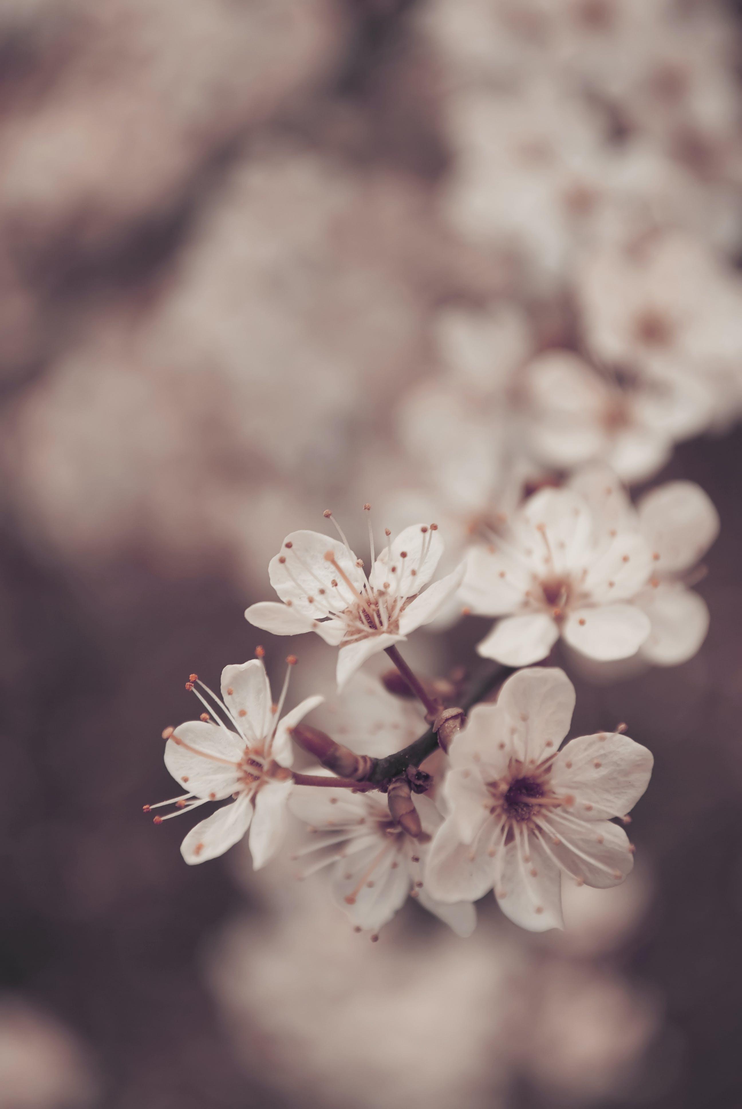 Gratis lagerfoto af blad, blomst, blomster, blomstrende