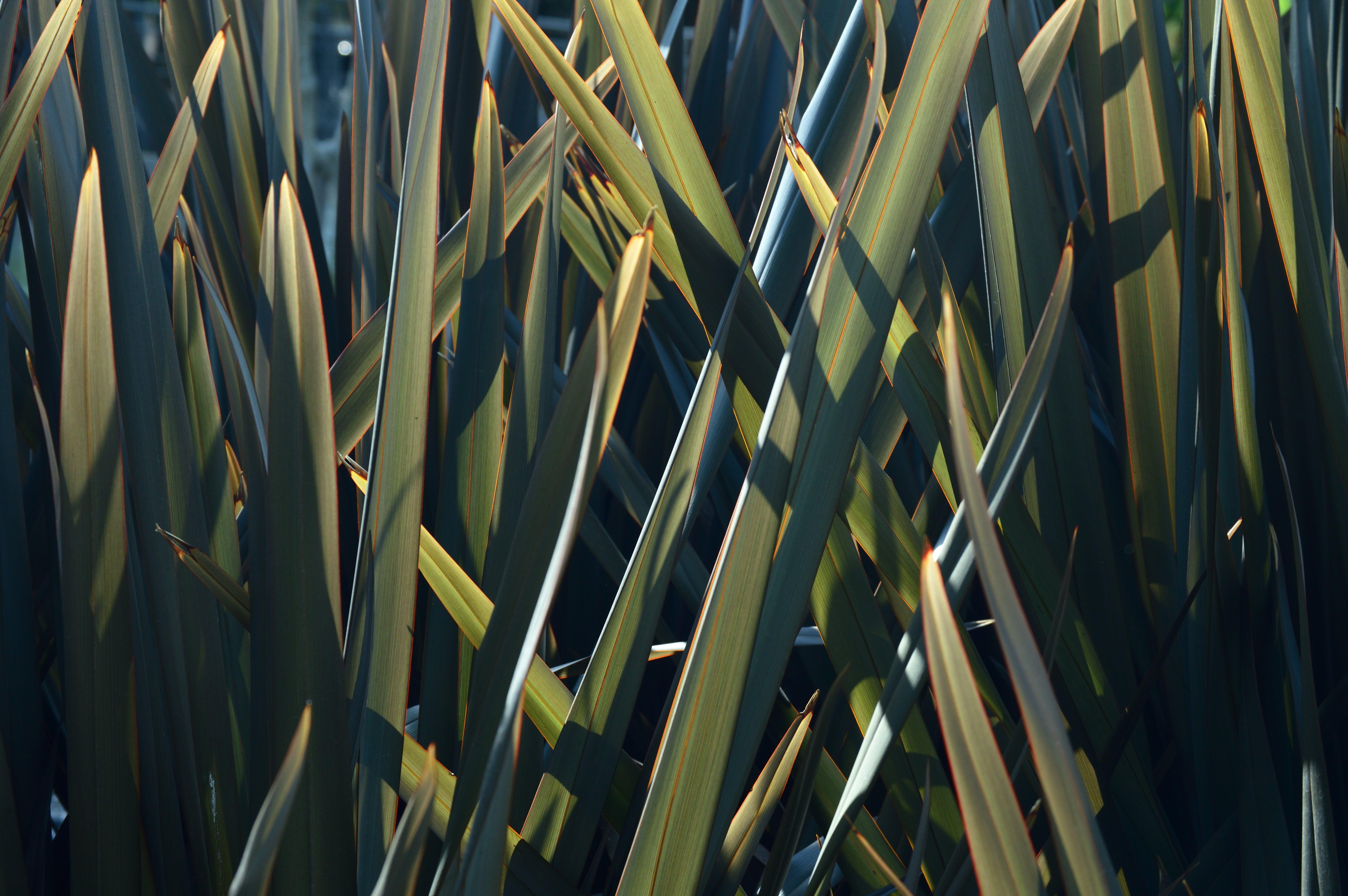 Kostenloses Stock Foto zu abstrakt, bambus, blatt, blätter