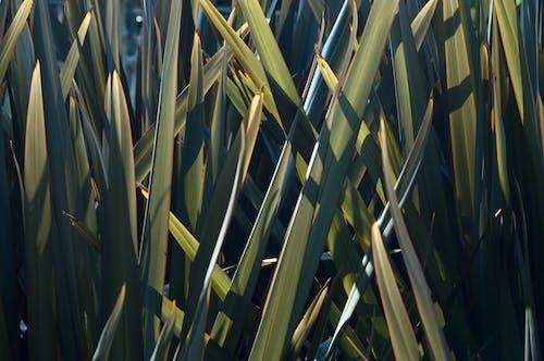 Foto profissional grátis de ao ar livre, aumento, botânica, brilhante