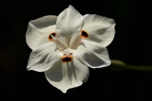 夏天, 植物學, 植物群, 漂亮 的 免费素材照片