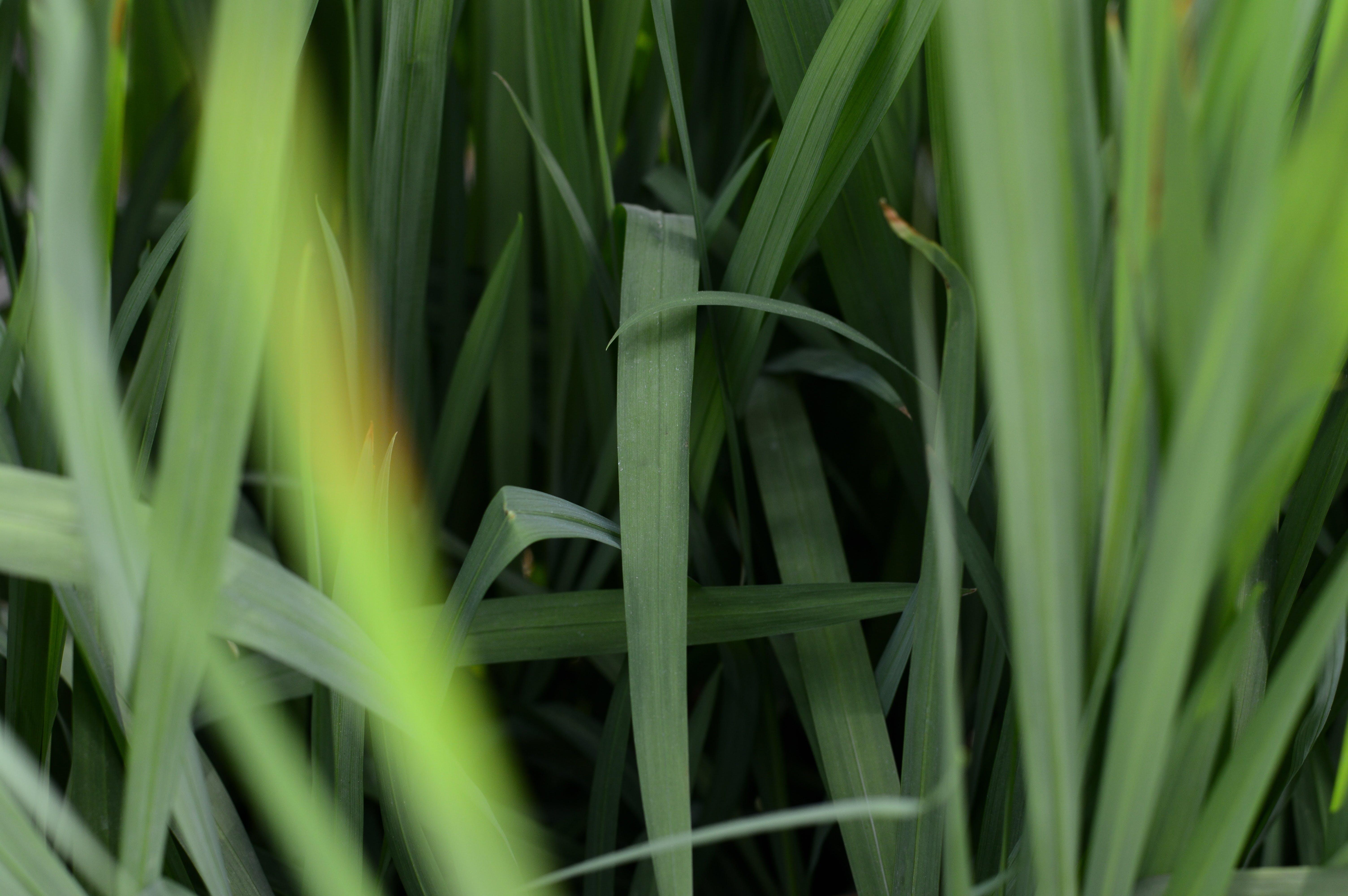 Kostenloses Stock Foto zu blätter, blühen, botanik, bunt