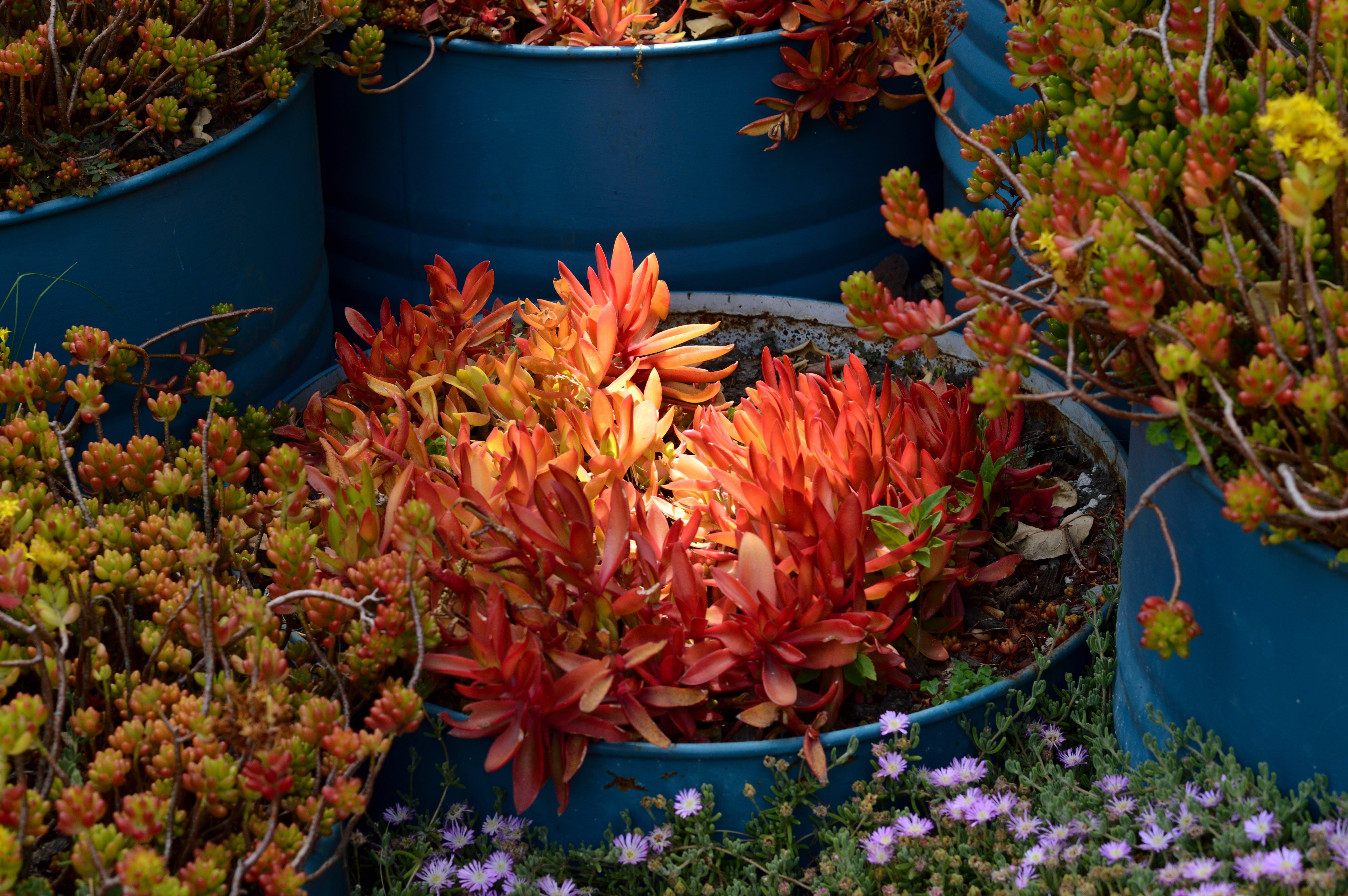 Fotos de stock gratuitas de bonito, botánica, botánico, cactus