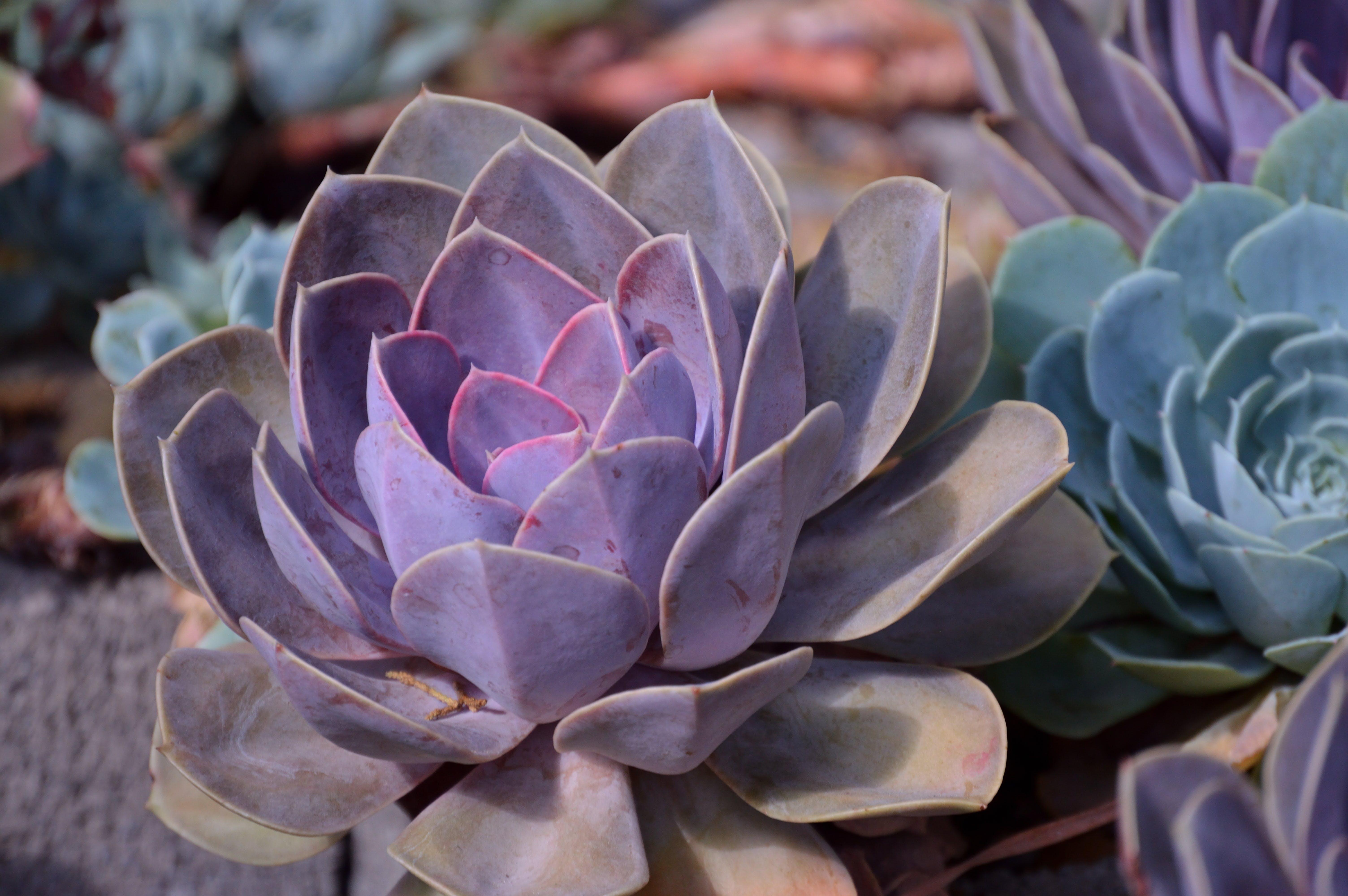 Kostenloses Stock Foto zu blatt, blumen, botanik, botanisch