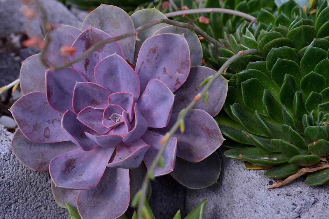 bellissimo, botanica, botanico