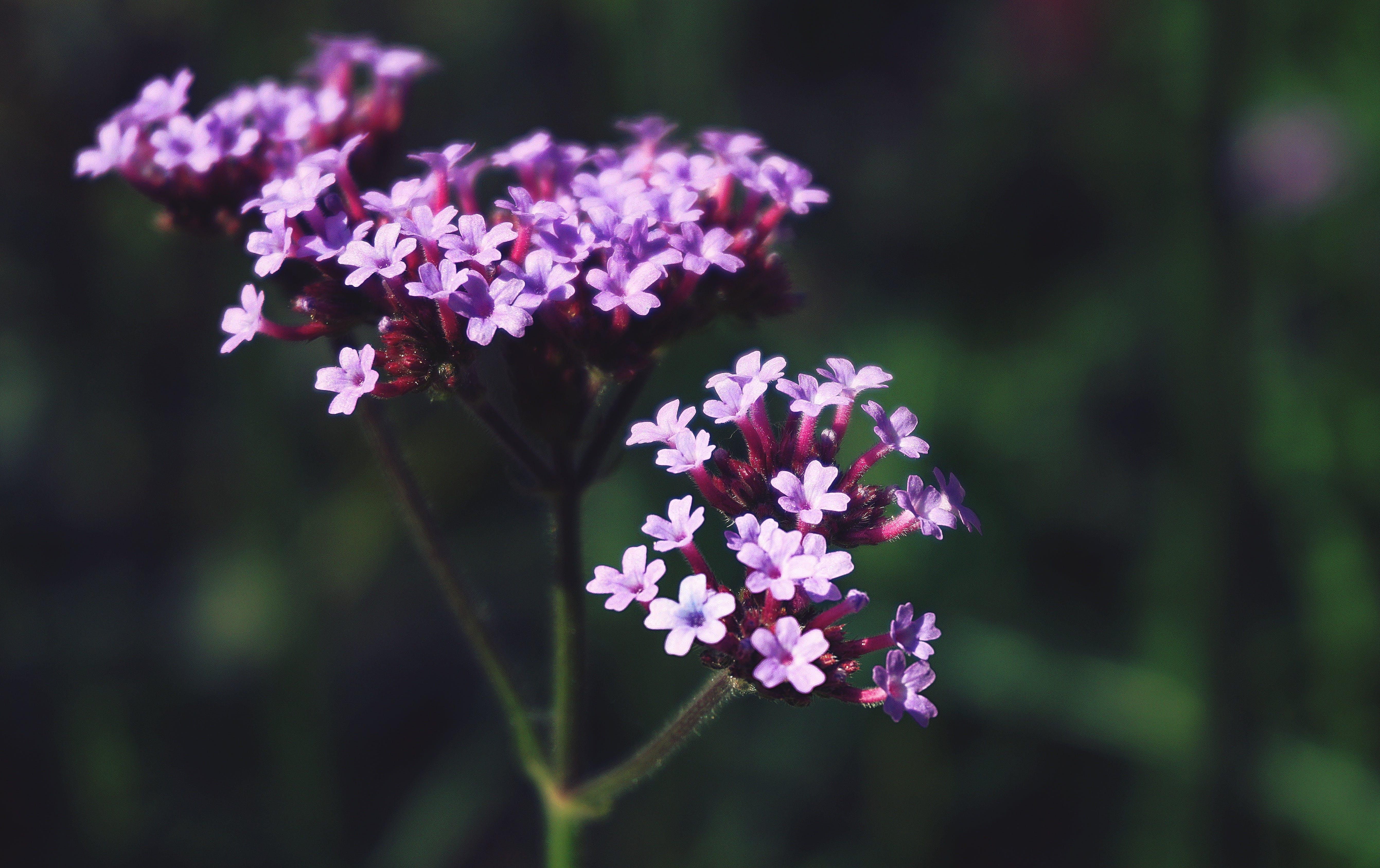 Gratis lagerfoto af blomster, blomstermotiv, flora, have