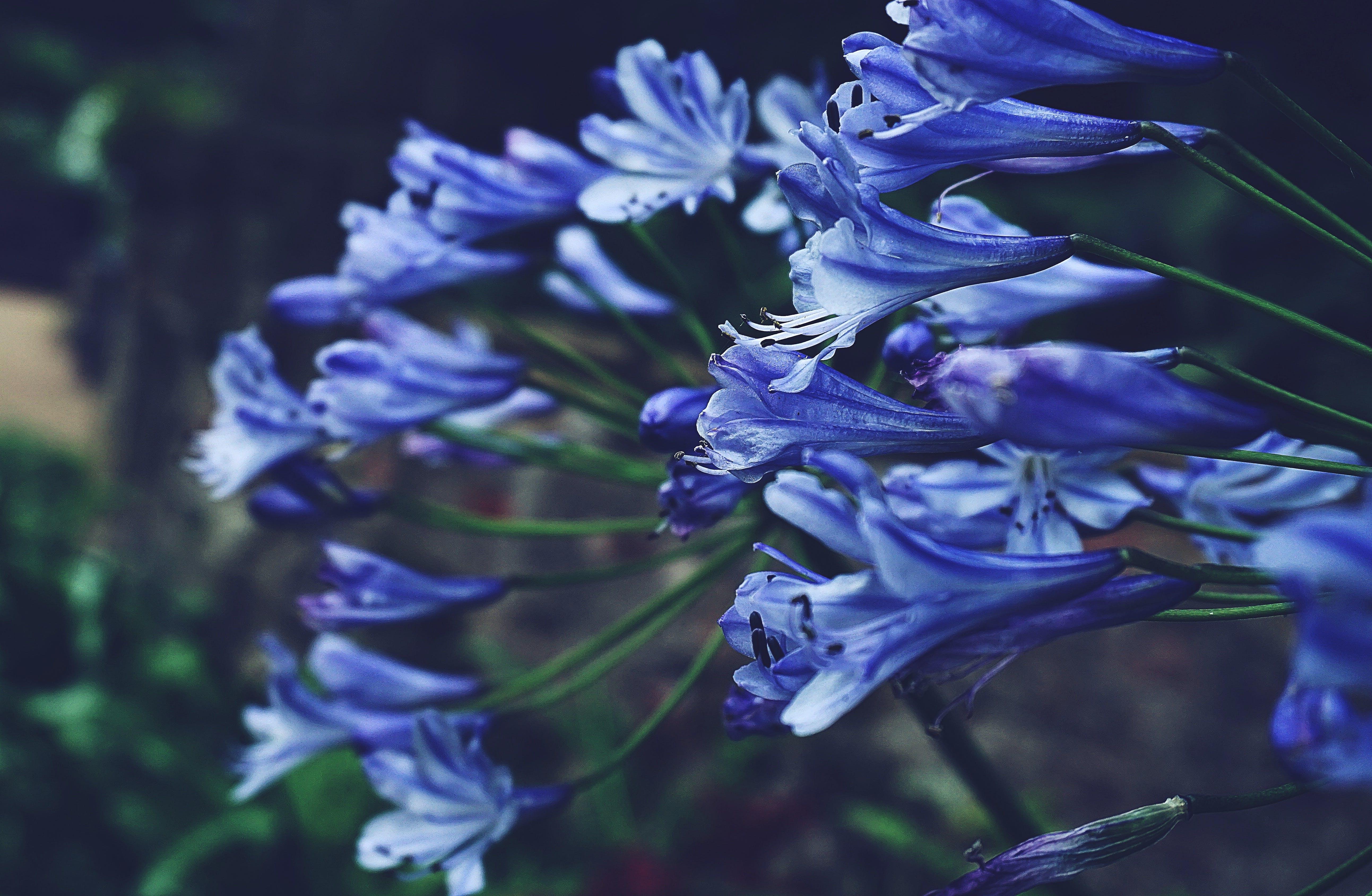 hosta, 꽃, 식물군, 자연의 무료 스톡 사진