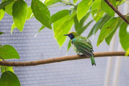Бесплатное стоковое фото с птица