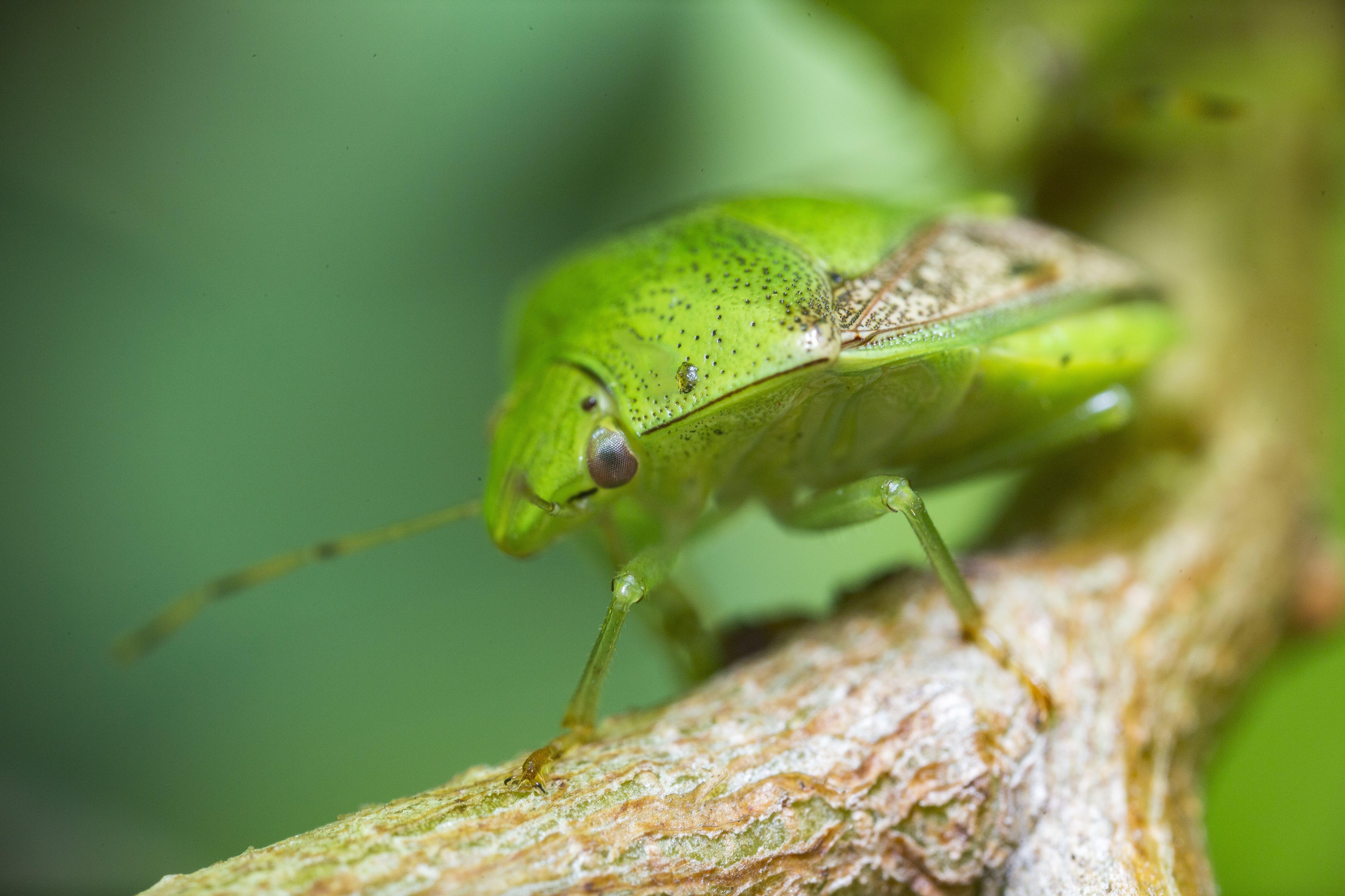 곤충, 동물, 떠나다, 매크로의 무료 스톡 사진