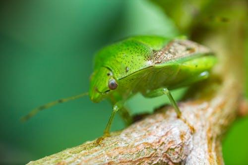 Бесплатное стоковое фото с животное, крупный план, максросъемка, насекомые