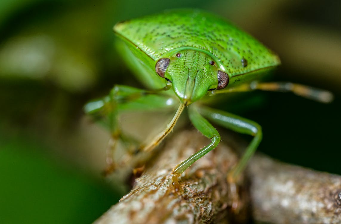 Macro Photography of Green Insect