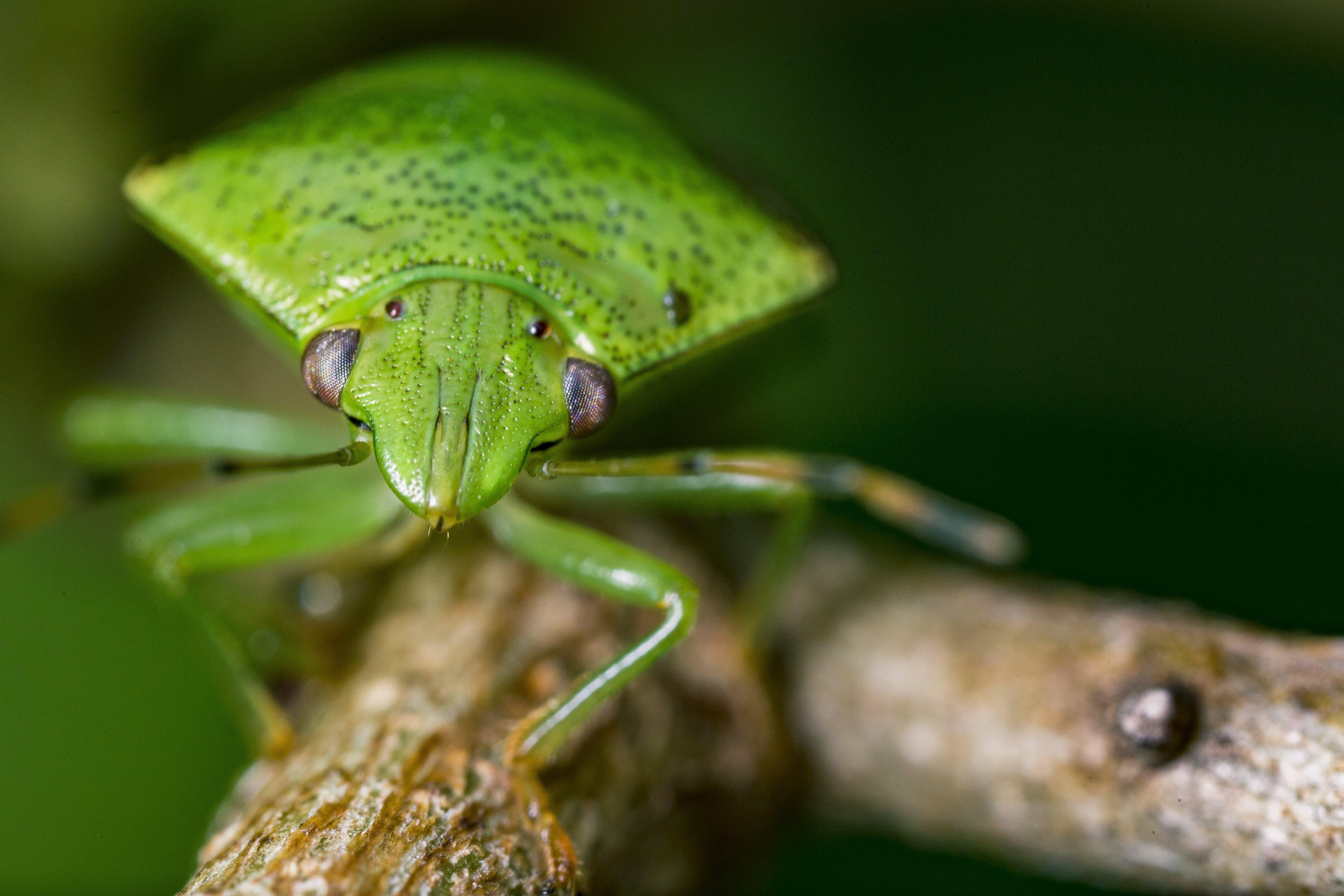 개구리, 곤충, 도마뱀, 동물의 무료 스톡 사진