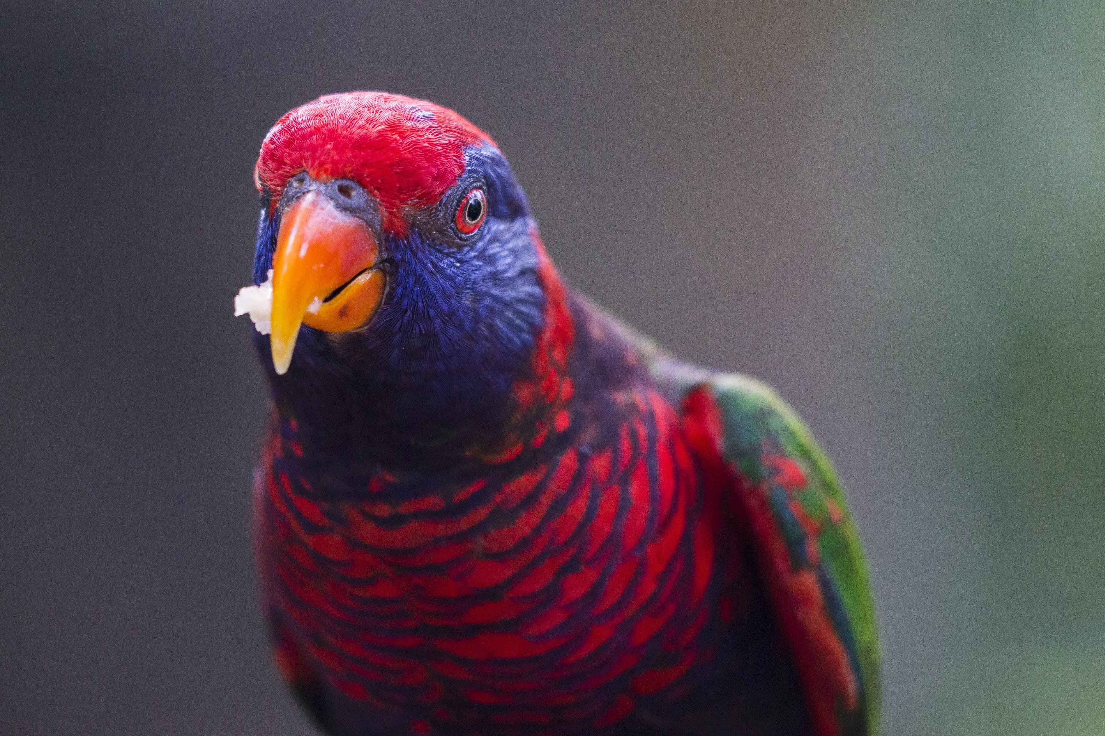 깃털, 날개, 눈, 다채로운의 무료 스톡 사진