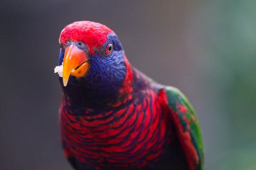 Portrait Of Multicolored Bird