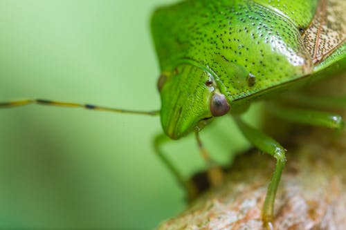 Photo of Green Insect Macro Shot