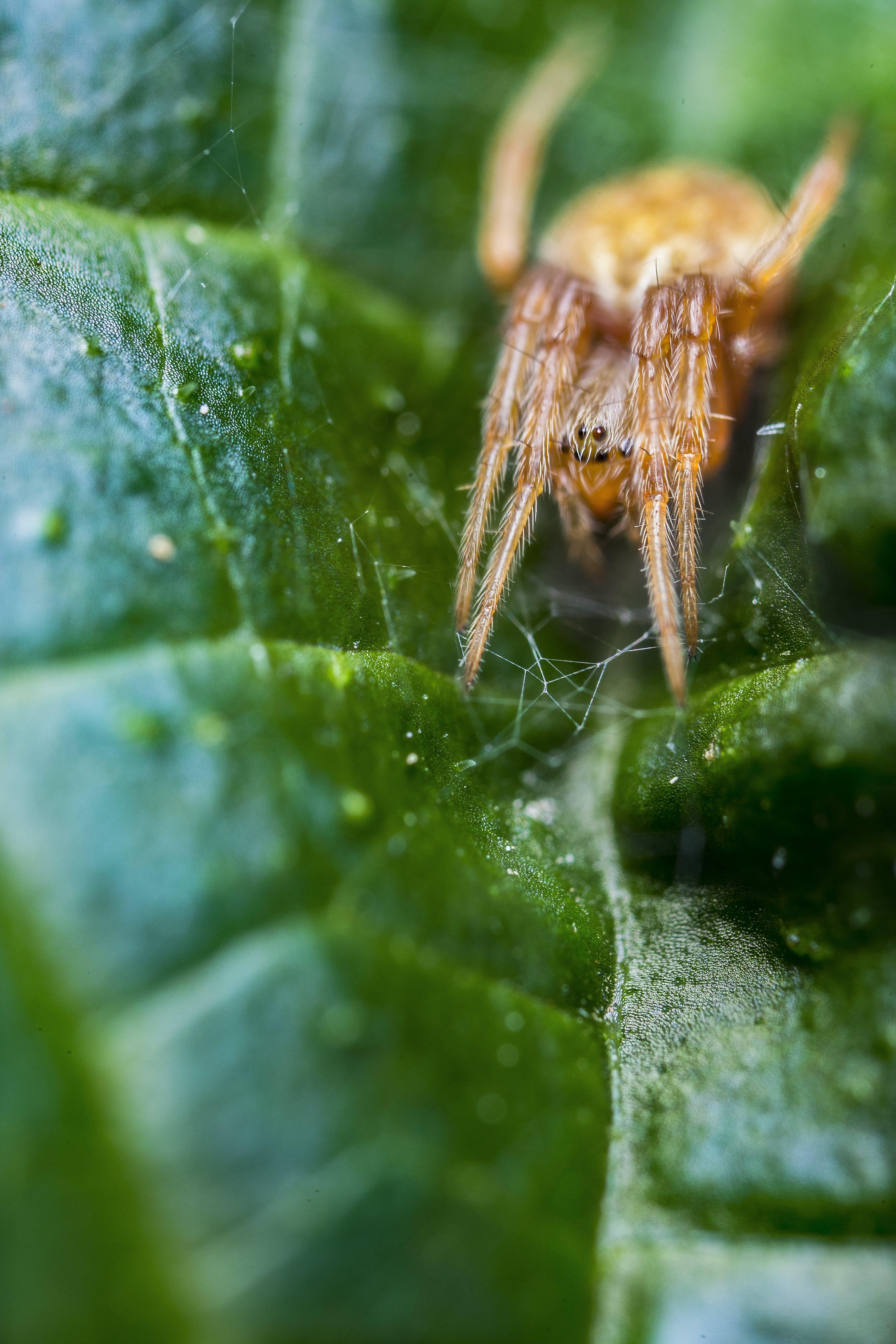거미, 곤충, 동물, 떠나다의 무료 스톡 사진