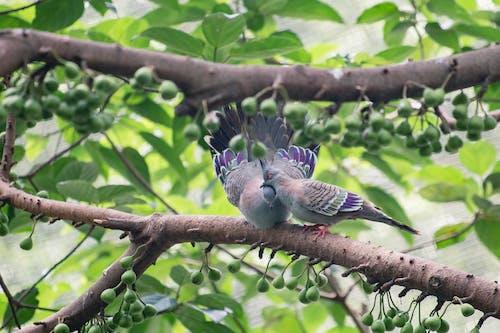 Бесплатное стоковое фото с животное, природа, птицы