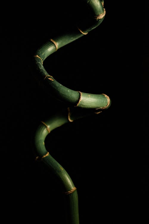 Close-up Photography of Lucky Bamboo Plant