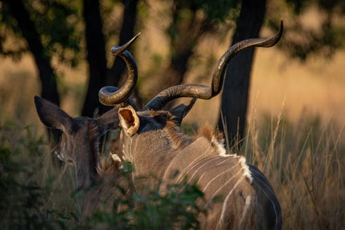 Immagine gratuita di africa, animali, animali selvatici, antilope