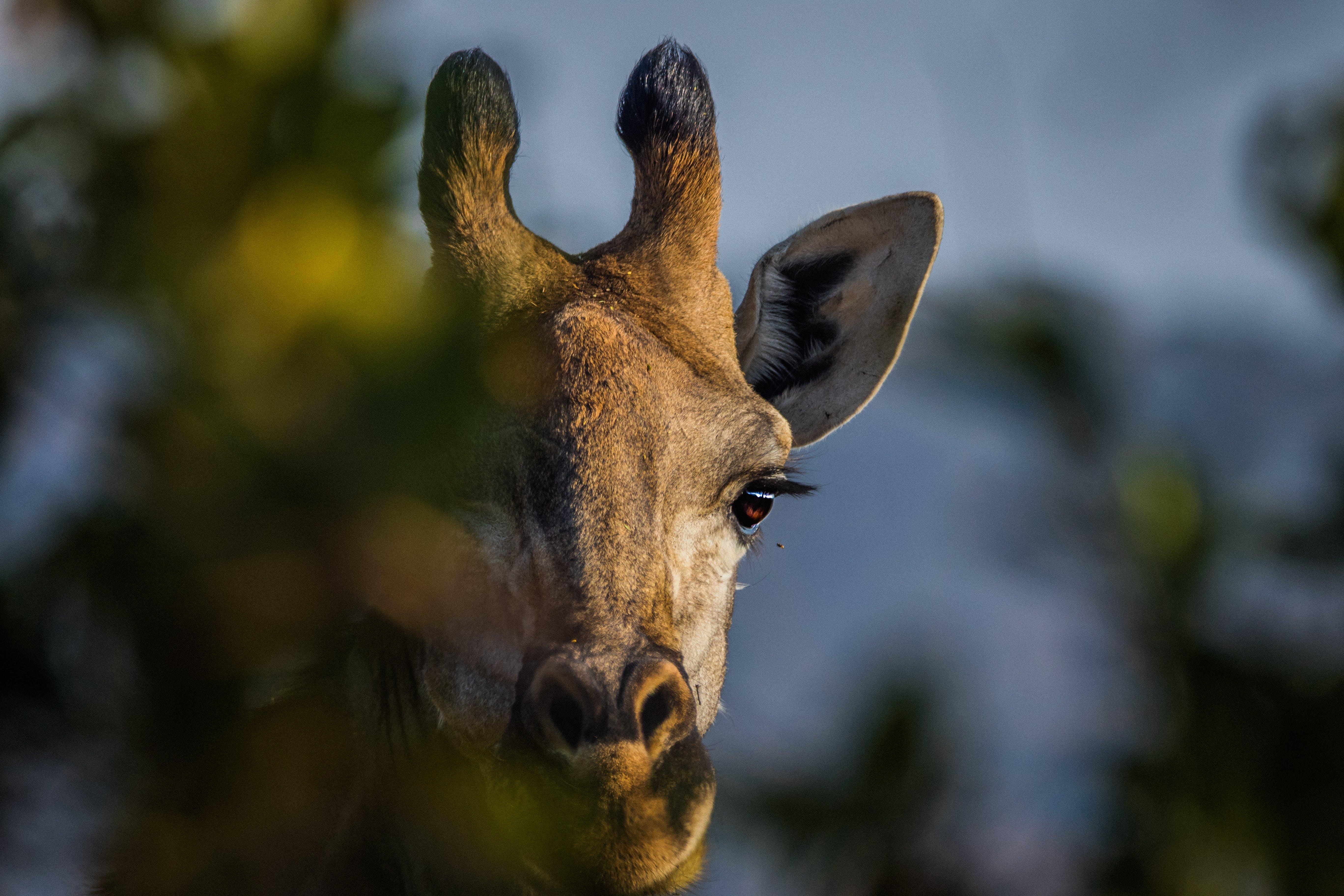 Foto d'estoc gratuïta de a l'aire lliure, Àfrica, animal, animal salvatge