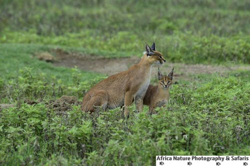 Kostnadsfri bild av naturfotografering, tanzania safari packaages, tanzania safari turer