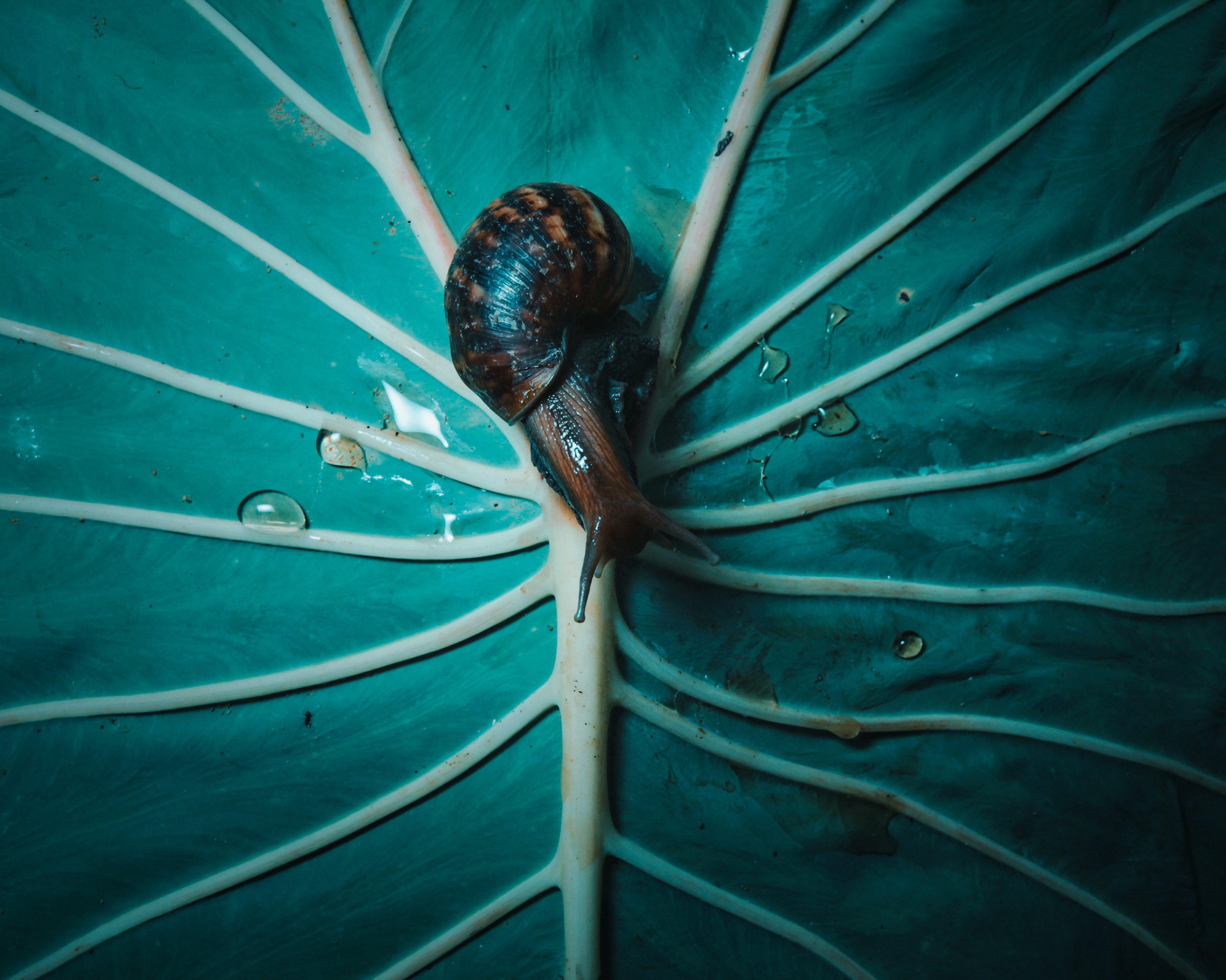 Free stock photo of snail