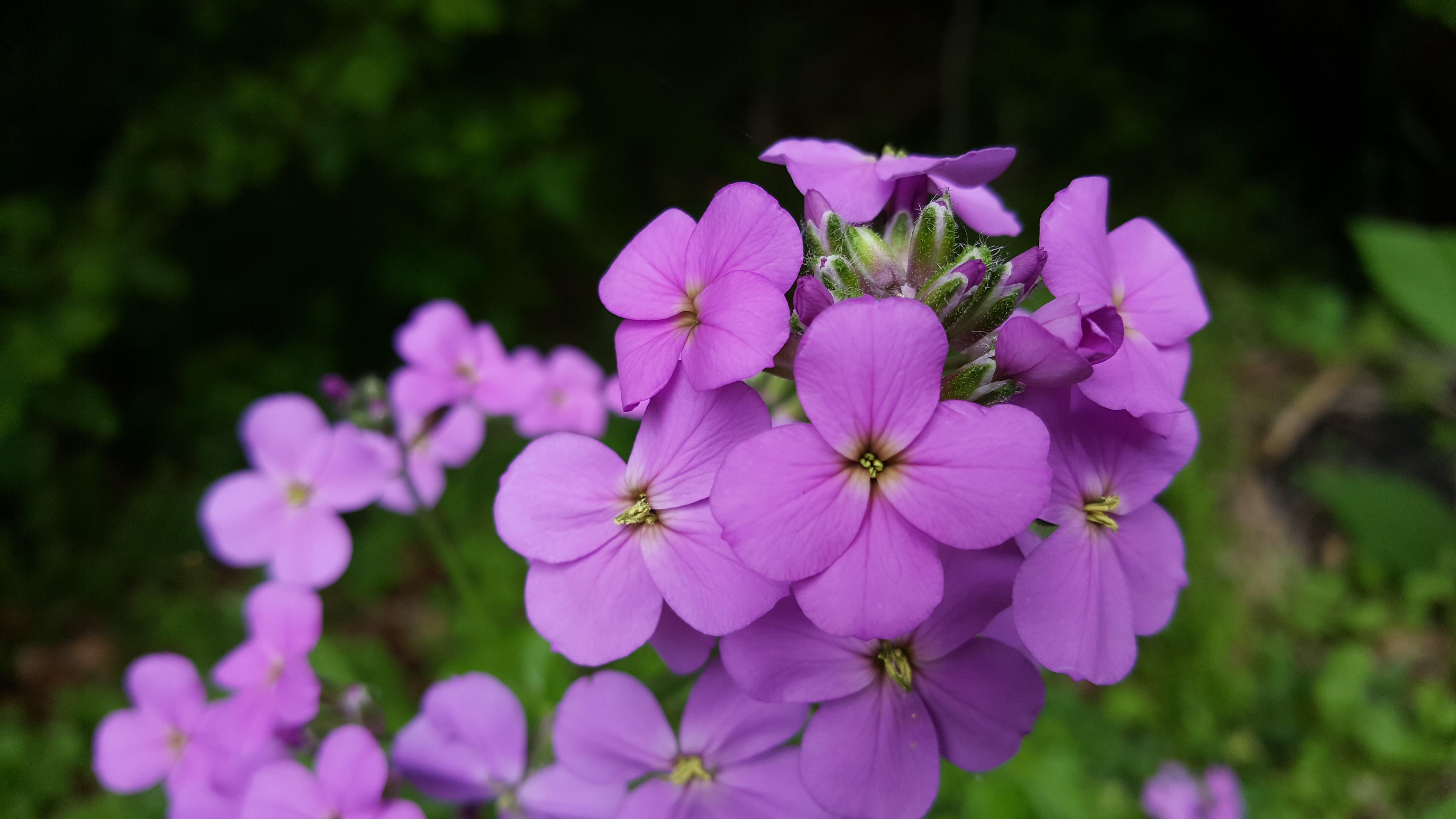 Free stock photo of beautiful flowers, spring