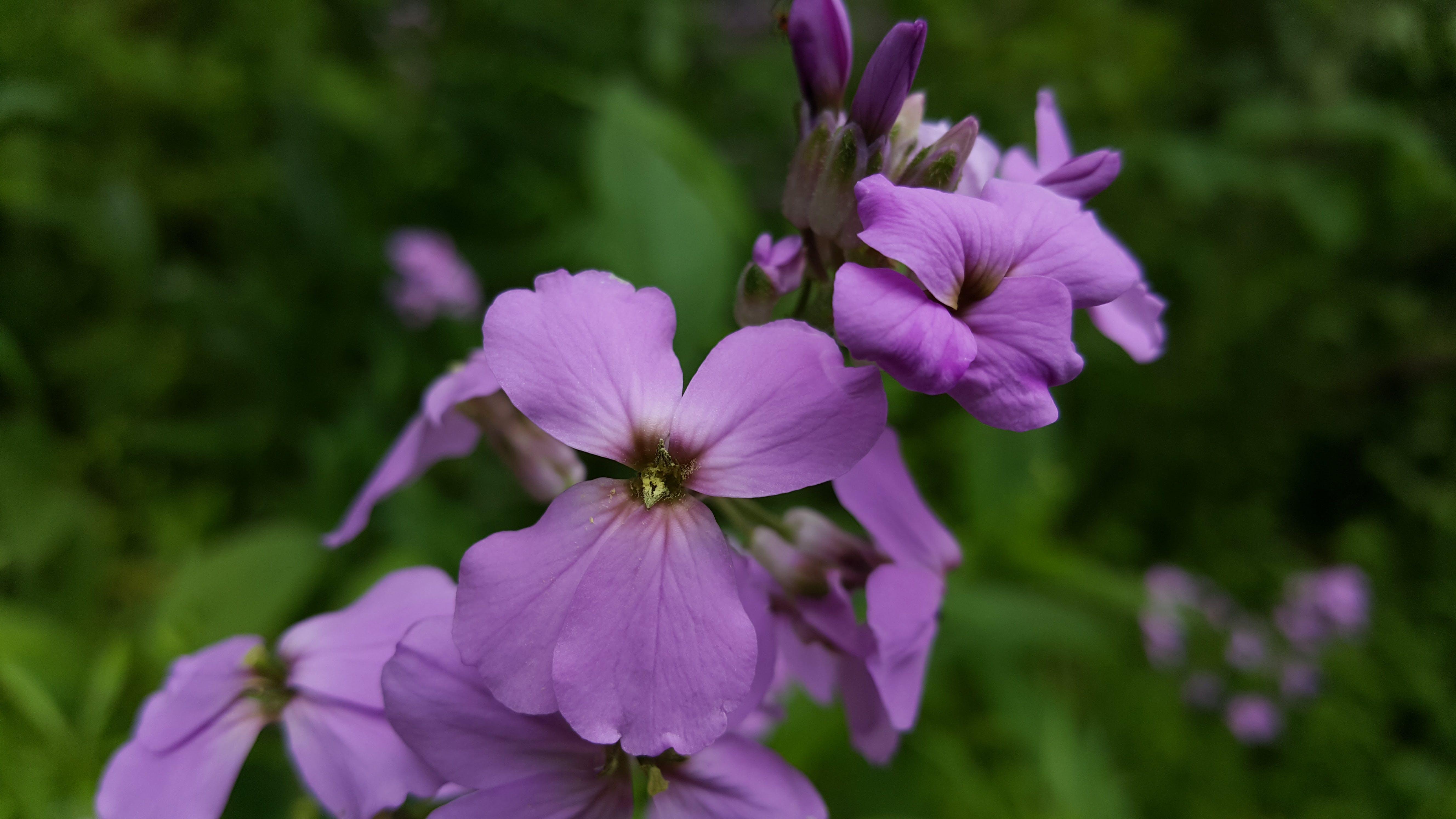 Free stock photo of spring, wild flowers