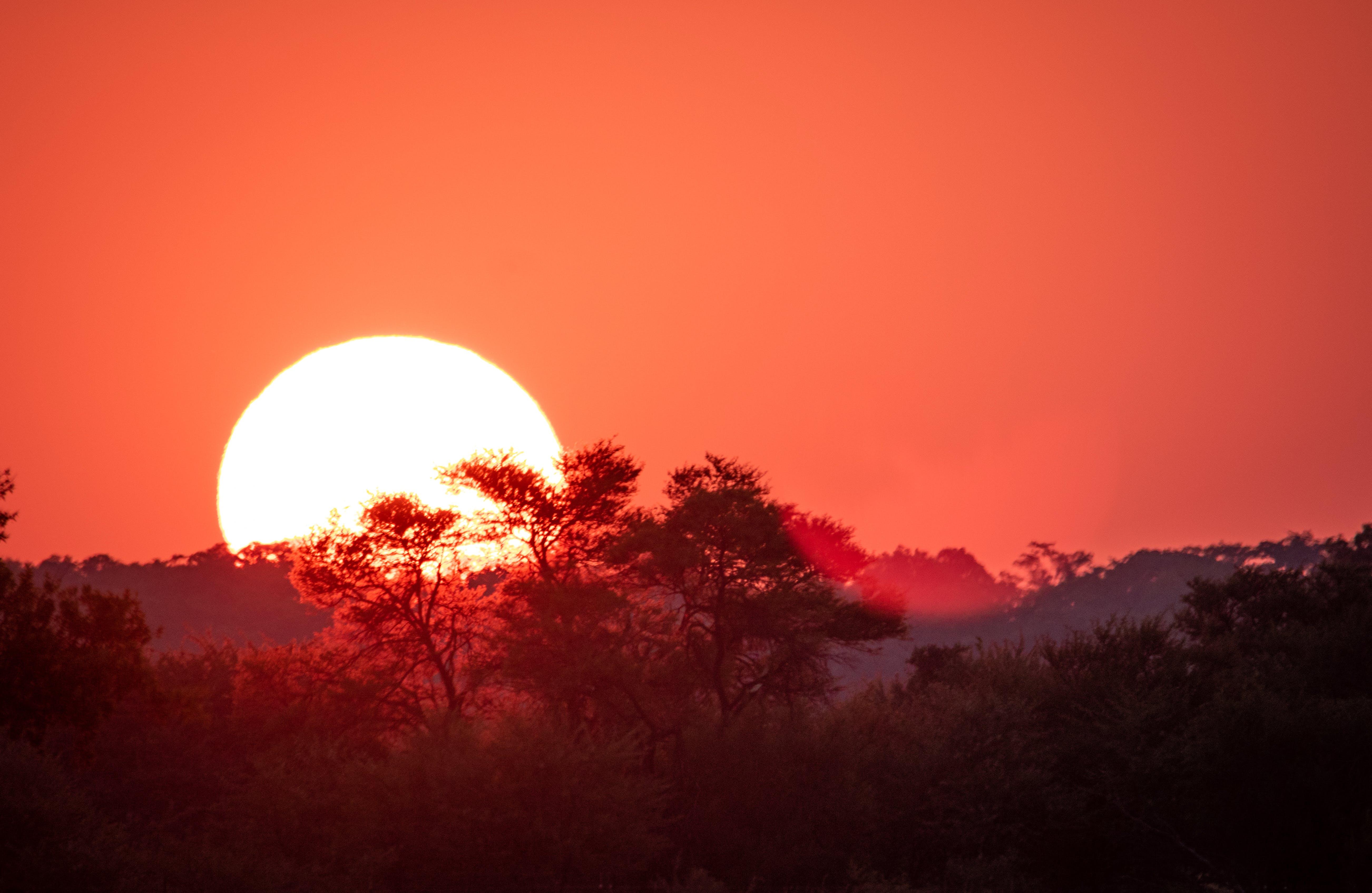 Foto d'estoc gratuïta de a l'aire lliure, alba, arbres, capvespre