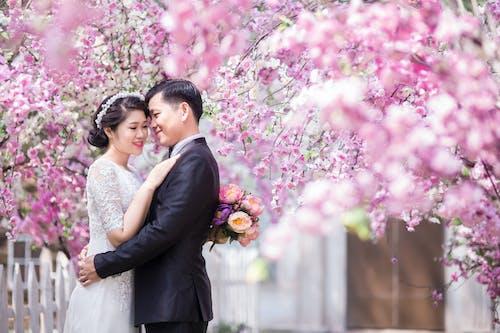 Immagine gratuita di affetto, albero, amore, fiori