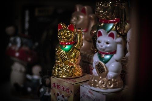 Darmowe zdjęcie z galerii z azjatycki, chiński, falowanie, falujący kot