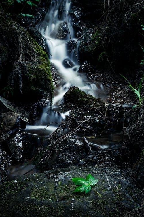 Free stock photo of dark green, waterfall