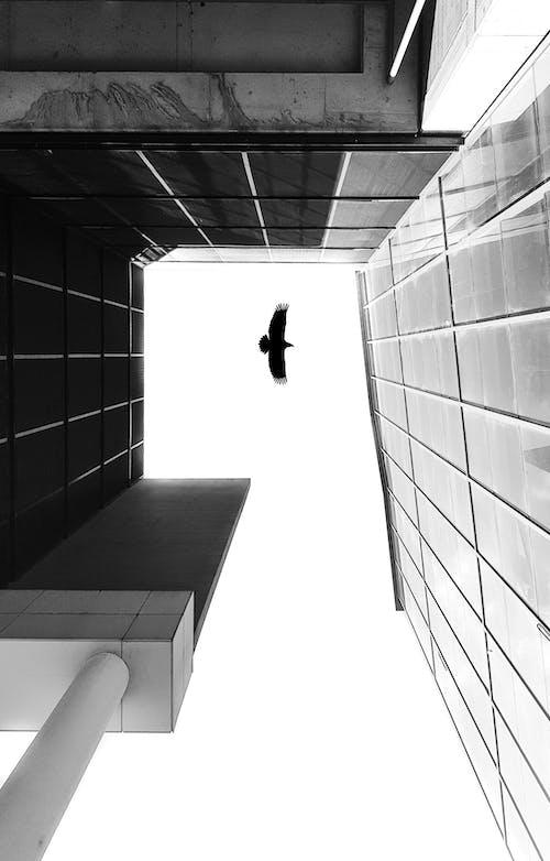 Kostenloses Stock Foto zu architektur, minimalismus