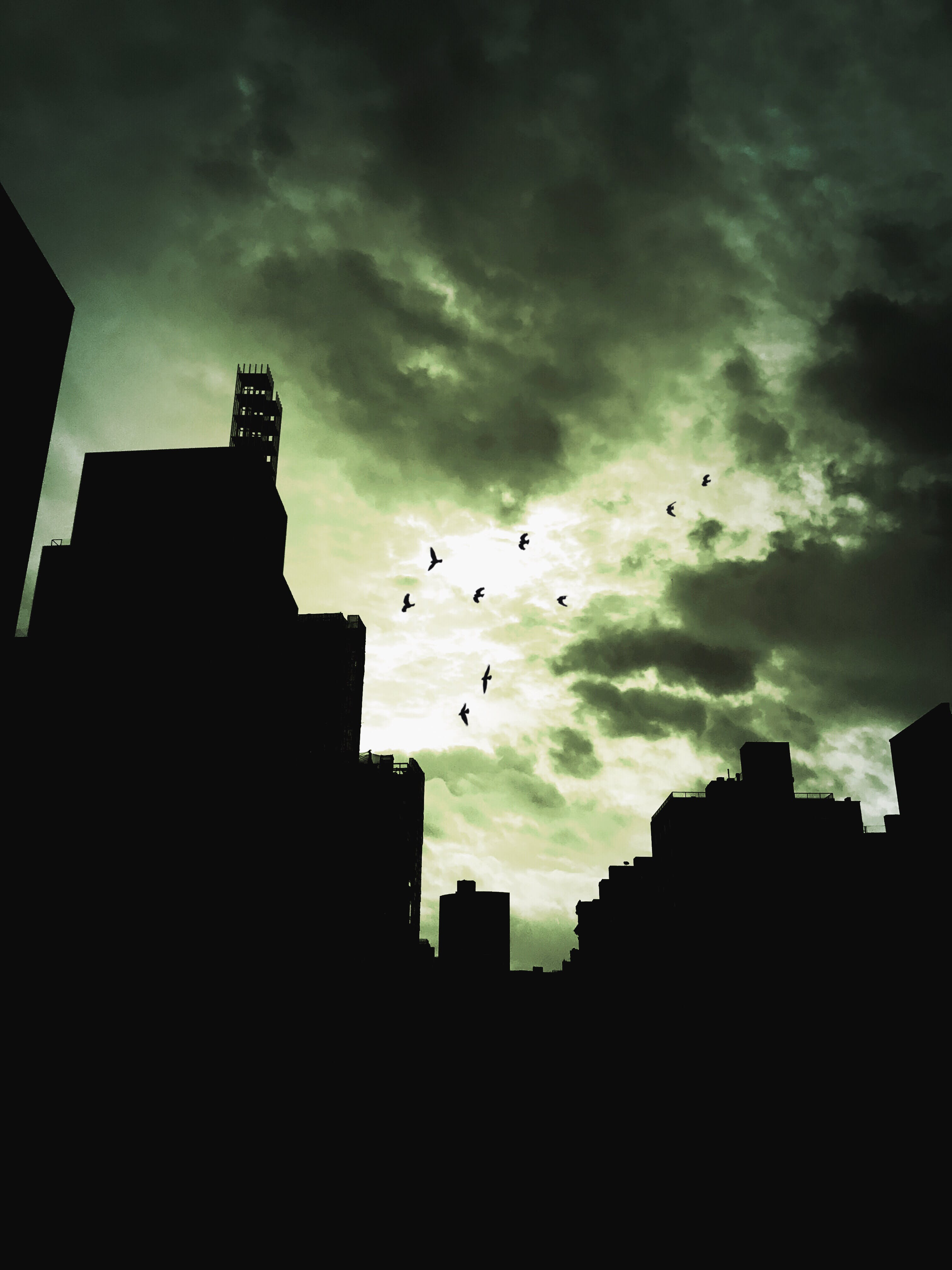 Silhouette Photography of City Buildings and Birds Flying